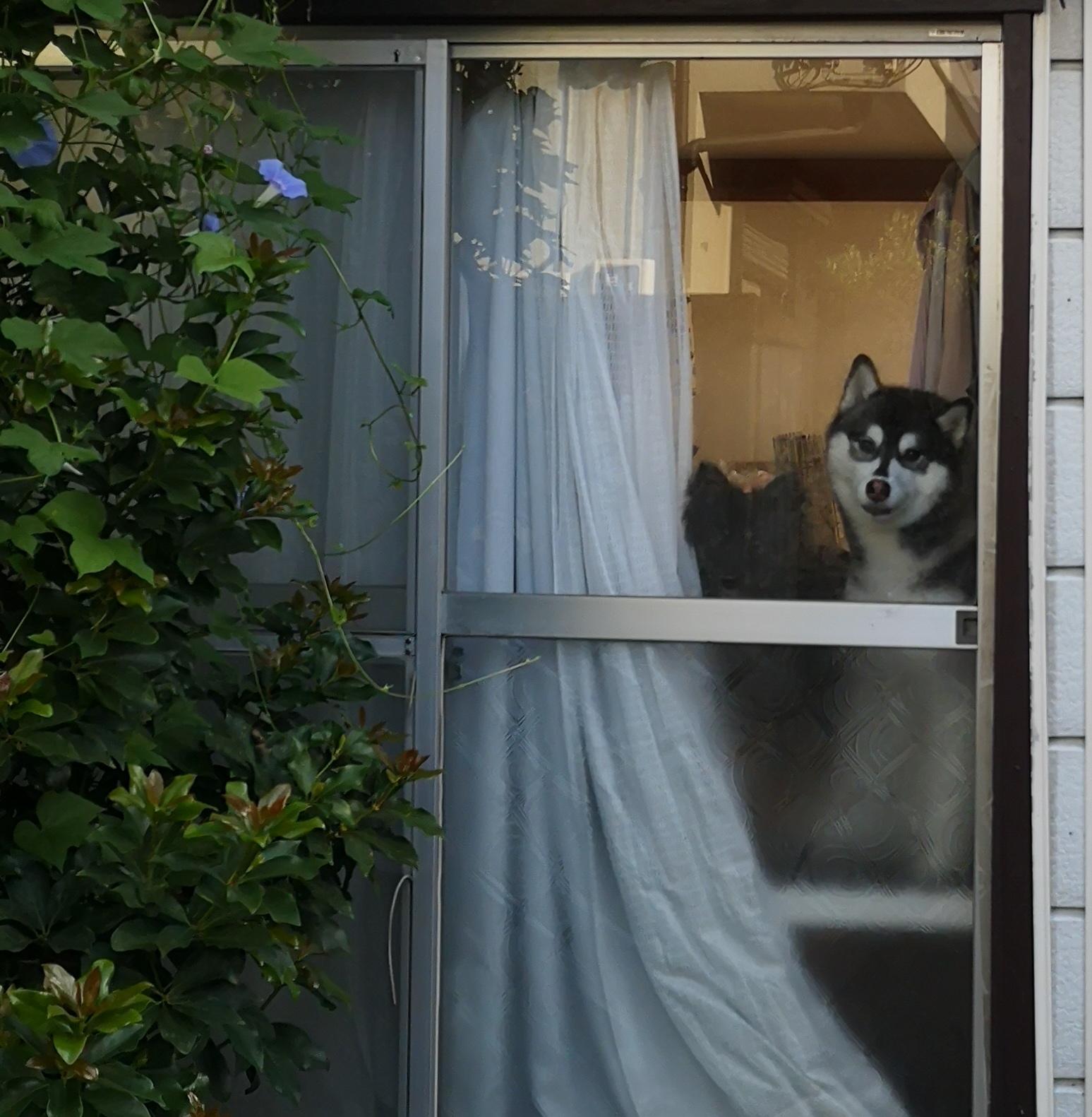 【愛犬と白馬旅行を考えている方へ】白馬は夏季がオススメ!
