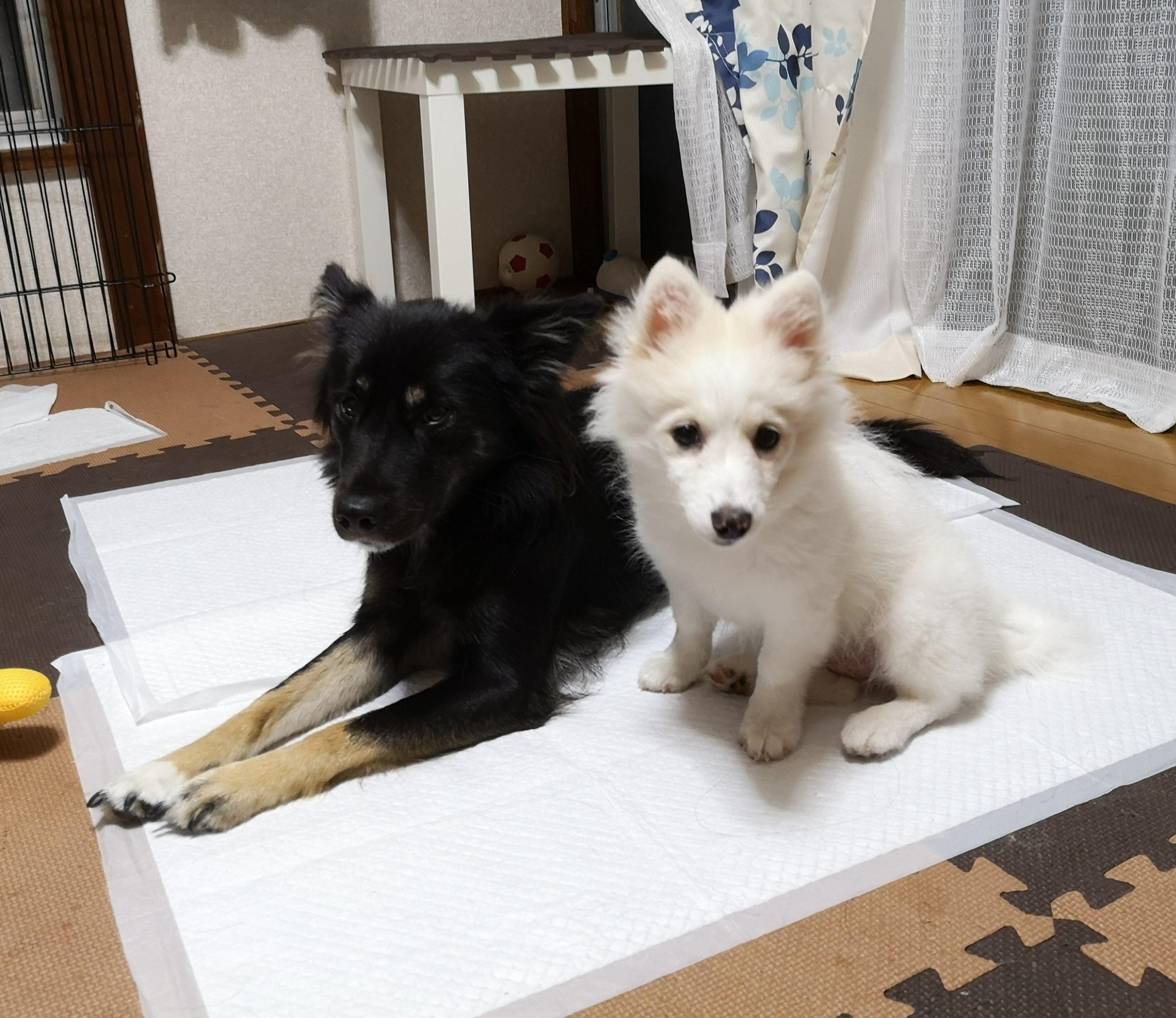 【ペットと伊豆旅行を考えている方へ】伊豆はオールシーズン楽しめます!