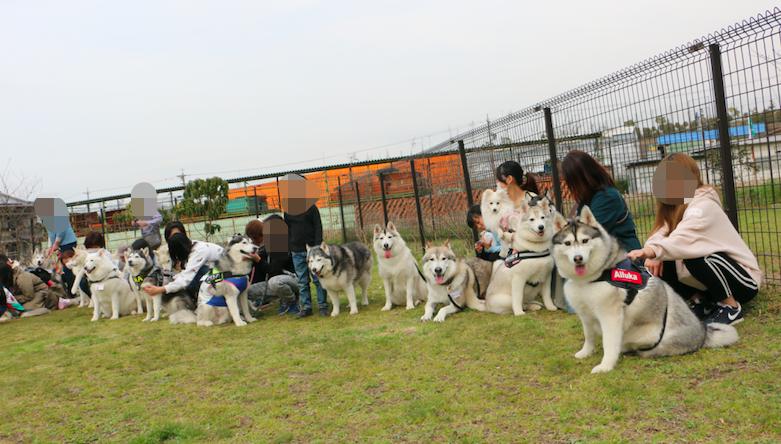 【美容室もペットと一緒に行きたい方へ】大型犬も同伴可な美容室2選
