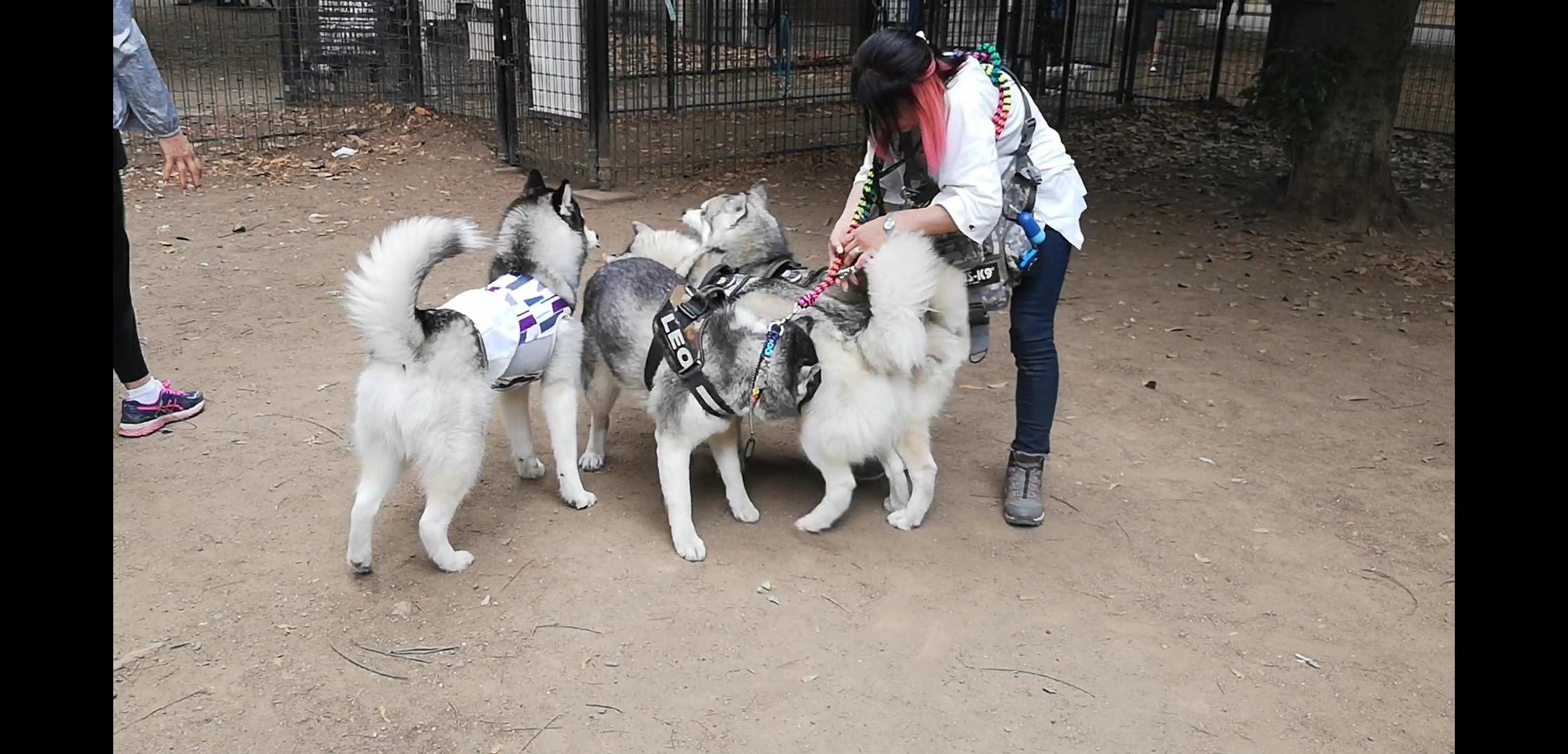 【愛犬と楽しむ千葉のドッグリゾート】小谷流の里ドギーズアイランド