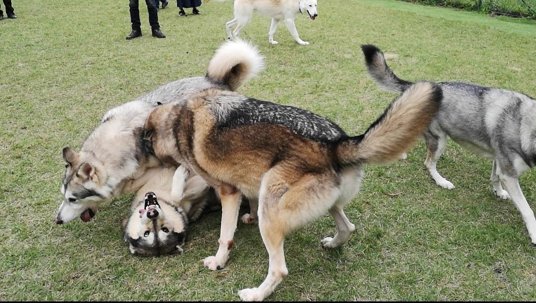 【愛犬とドライブしたい方へ】犬の車酔いをなくす方法
