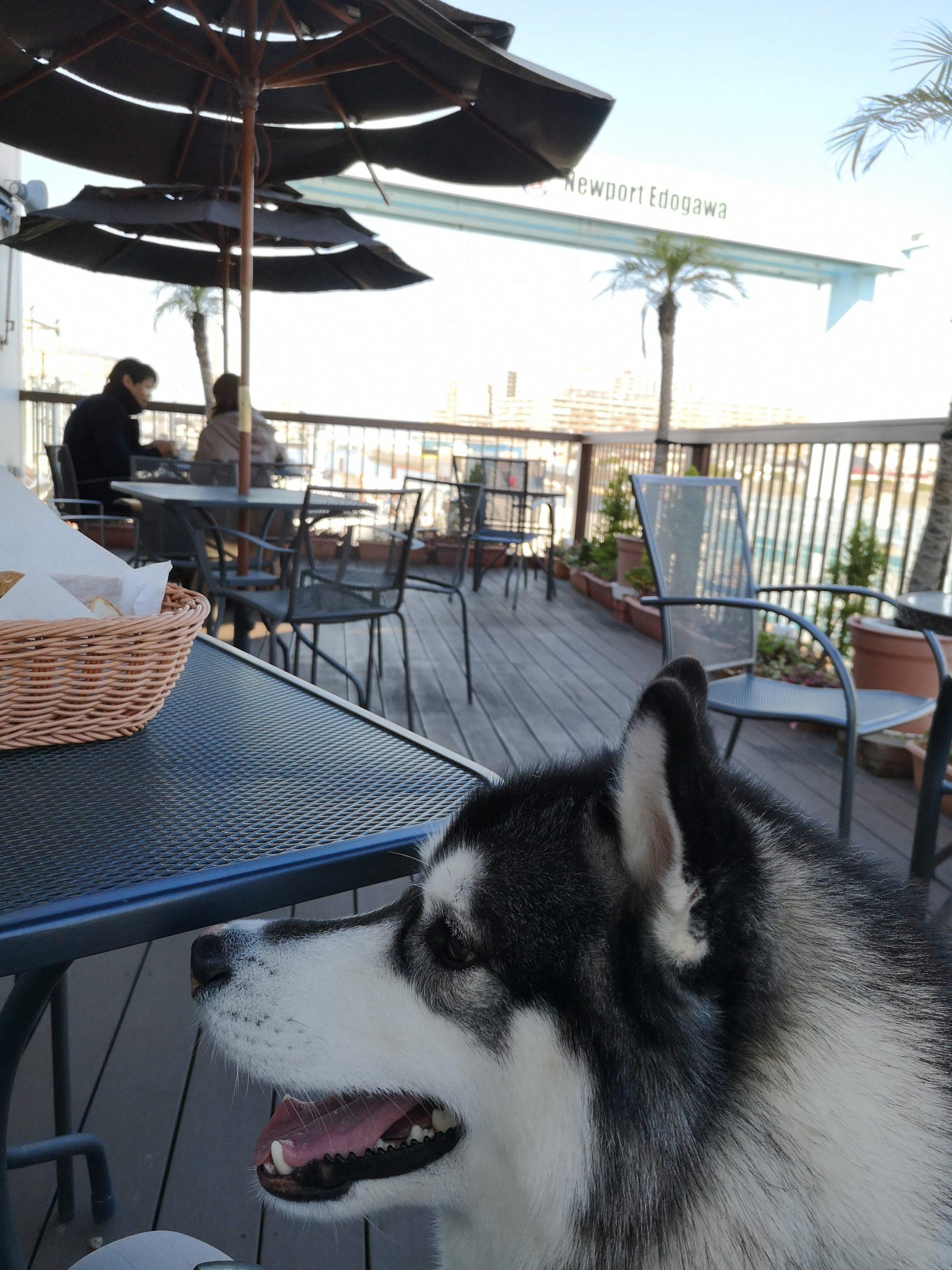 【愛犬とゲレンデ滑走!】野沢温泉スキー場