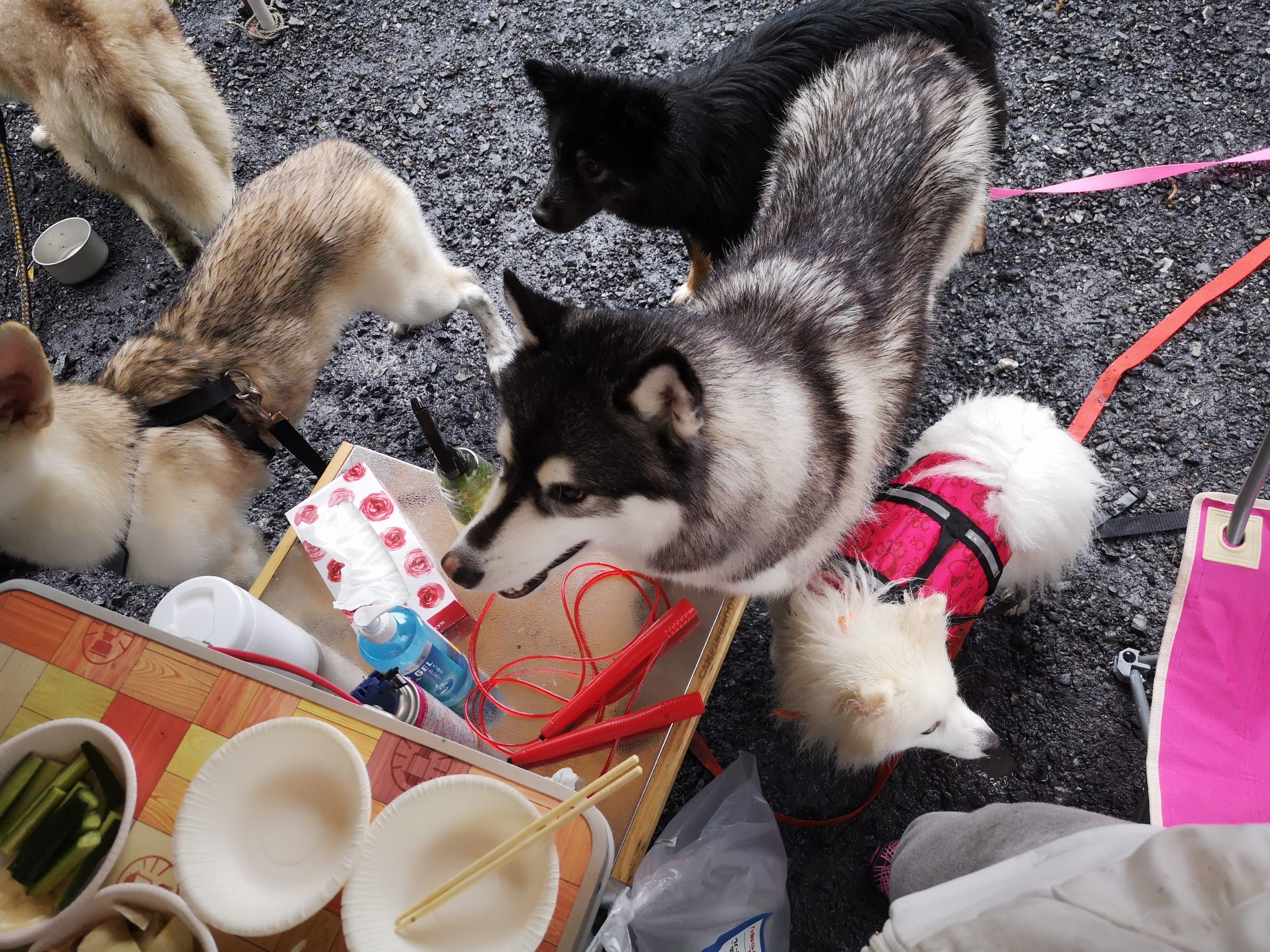 【ペットとペットファンのための参加・体験型イベント】ペット博2020横浜