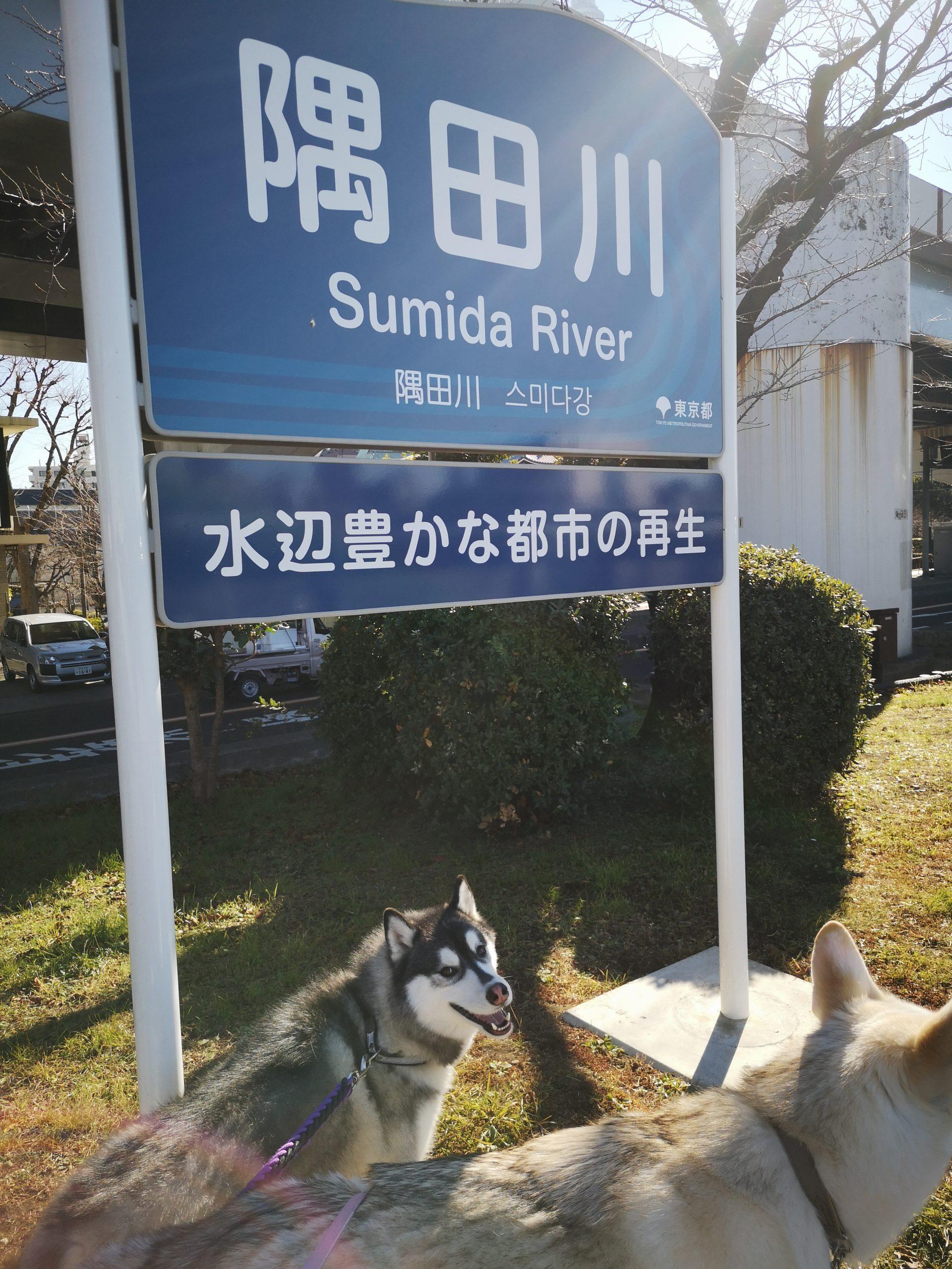 【ペットとお花見】東京都葛飾区の水元公園
