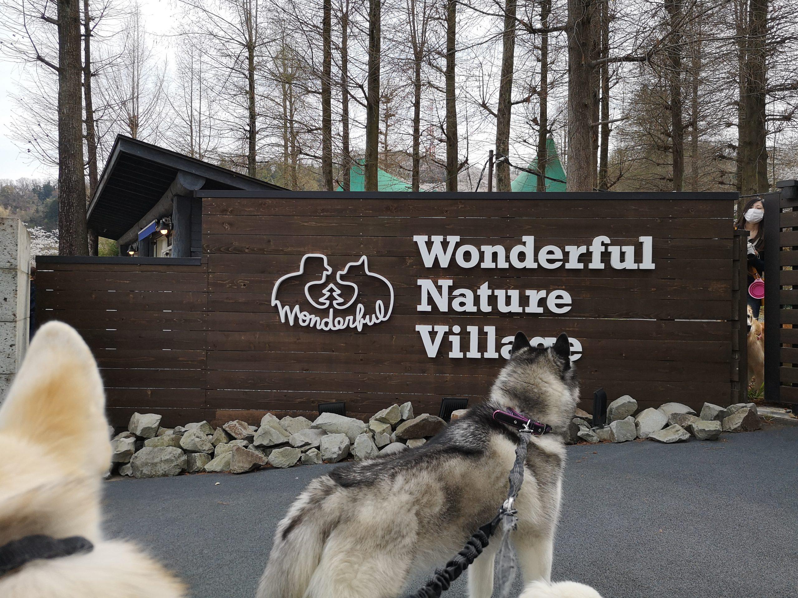 【狼犬を飼いたい方へ】日本の狼犬ブリーダーまとめ